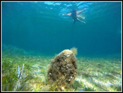 Snorkeling et al